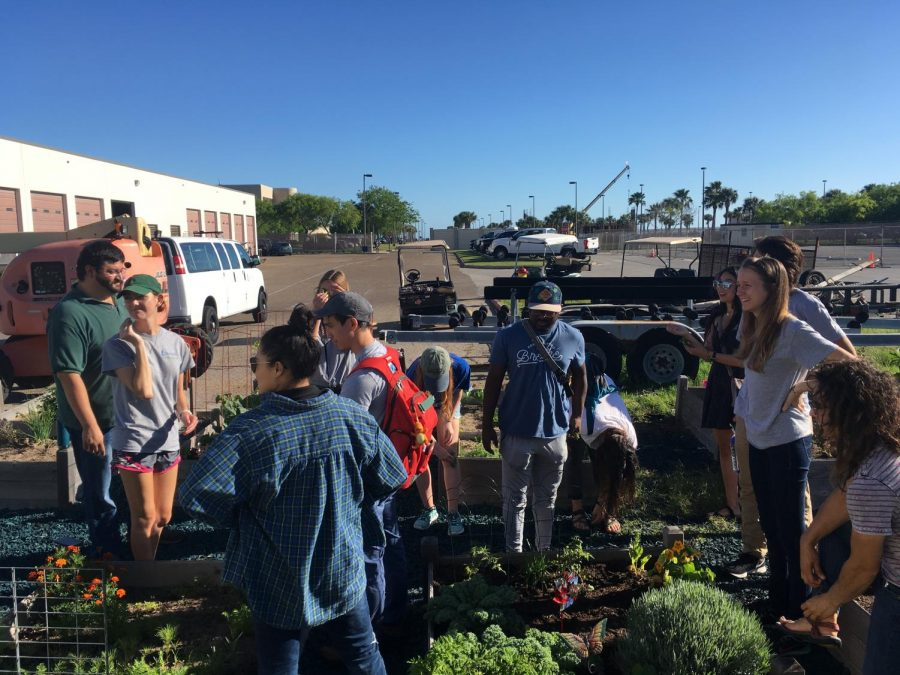 Photo contributed by Islander Green Team  Green Team Garden - The Islander Green Team works together in the garden located near printing services and will be hosting an event there Friday, April 26, at 9:30 a.m. for Earth Week.